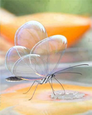 glass-butterfly